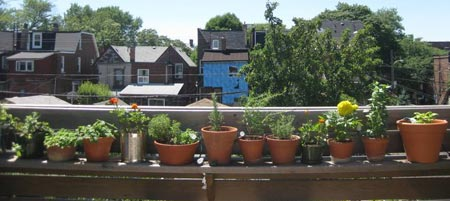 Herbs growing on a deck (Photo: Evergreen)
